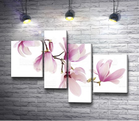 Цветение веточки магнолии