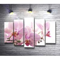 Нежно-лиловая веточка орхидеи