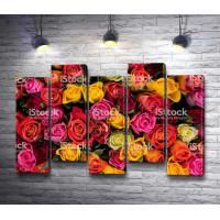 Разноцветные бутоны роз