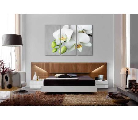 Белоснежный бутон орхидеи