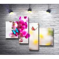 Бабочка на розовой орхидее