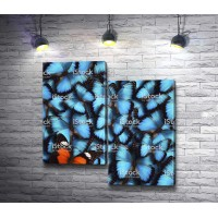 Оранжевая бабочка среди голубых