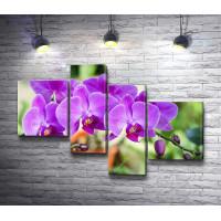 Фиолетовый цвет орхидеи
