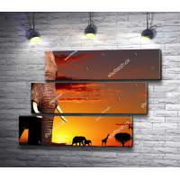 Слон на фоне заката в Сафари