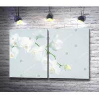 Веточка белоснежной орхидеи