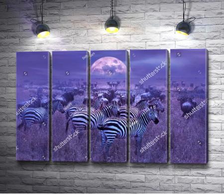 Стадо зебр на фоне лунного неба