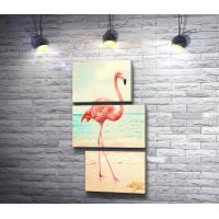 Фламинго на песчаном берегу