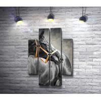 Лошадь в черно-белой гамме