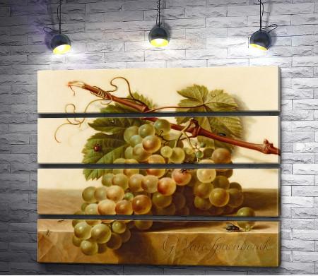 Виноград с насекомыми на мраморной плите (Герард ван Спендонк)