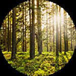 "Картины на холсте по теме ""Лес, деревья"""