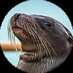 """Картины на холсте по теме """"Тюлени, морские котики"""""""