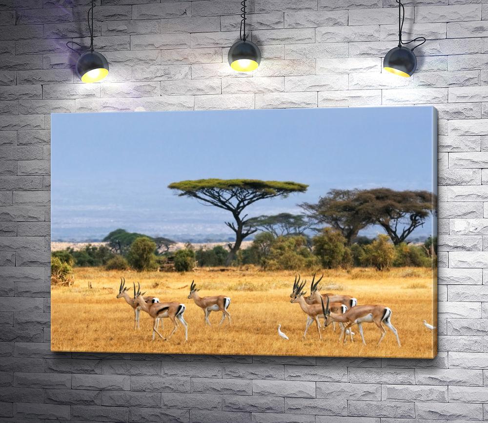"Картина ""Сафари в Южной Африке"""