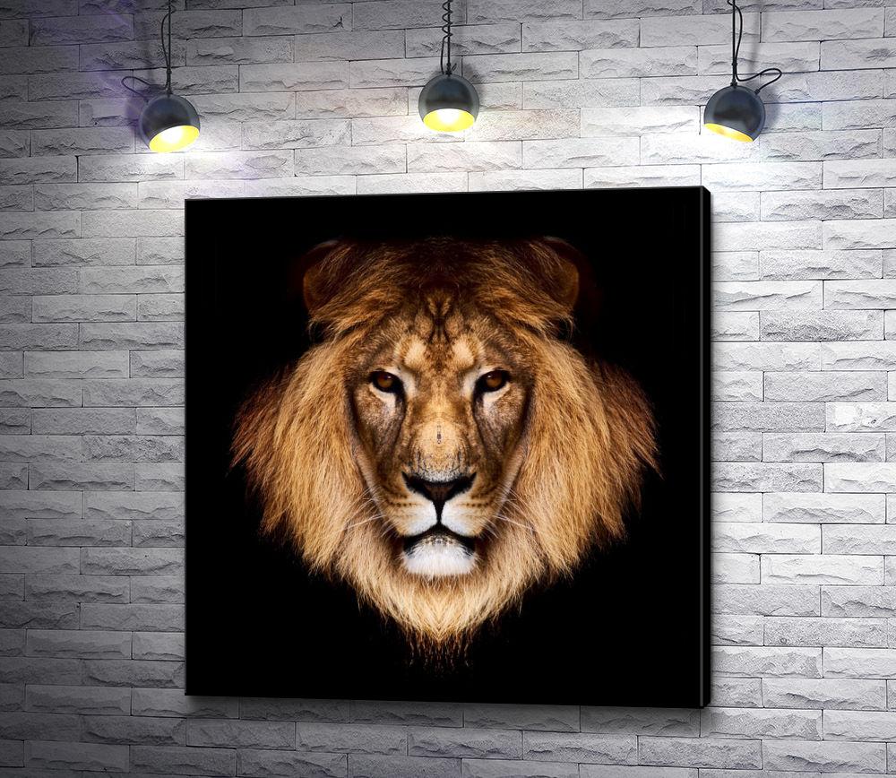 """Картина """"Голова льва на черном фоне"""""""
