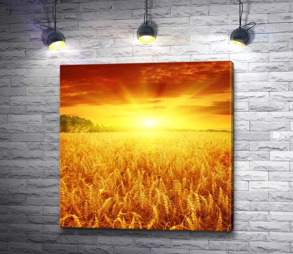 """Картина """"Рассвет над пшеничным полем"""""""