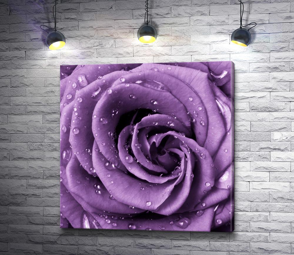 """Картина """"Сиреневая роза с каплями воды"""""""
