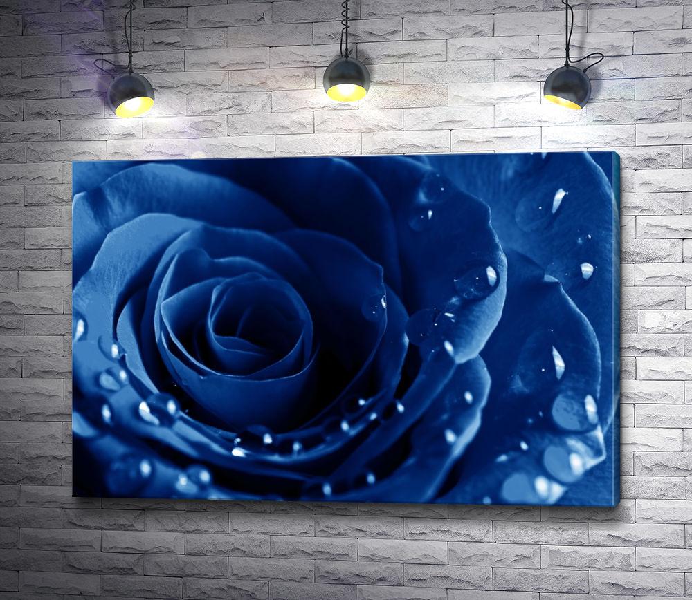 """Картина """"Синяя роза. Макросъемка"""""""