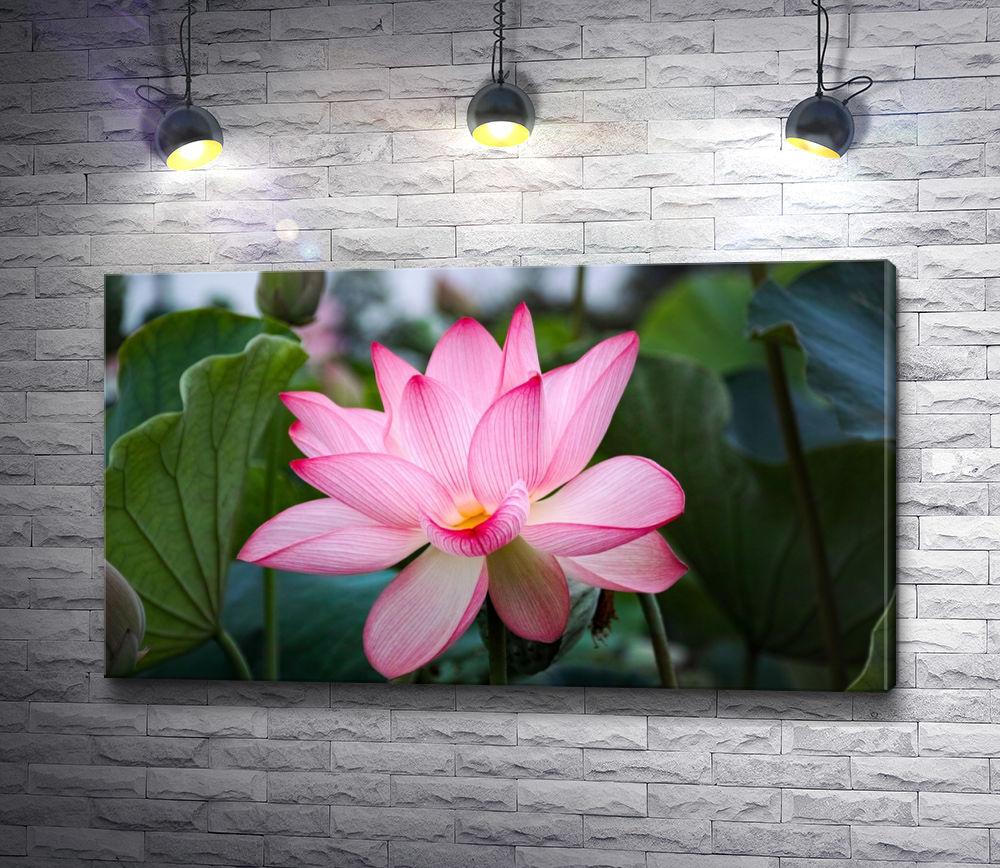 """Картина """"Изысканный цветок """""""