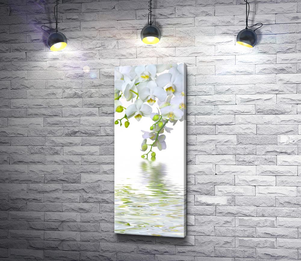 """Картина """"Белые орхидеи отражаются в воде"""""""
