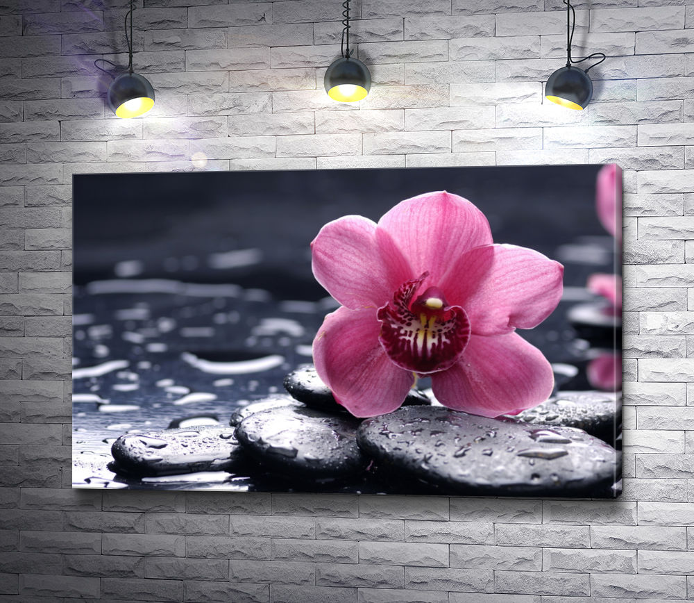 "Картина ""Розовая орхидея на камнях"""