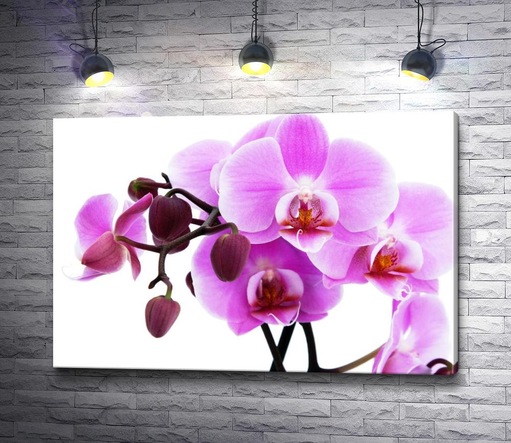 "Картина ""Веточка орхидеи"""