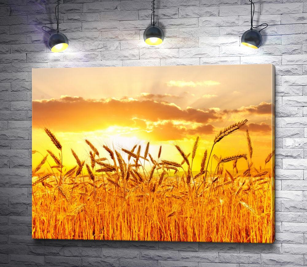 """Картина """"Колосья пшеницы на фоне заката"""""""