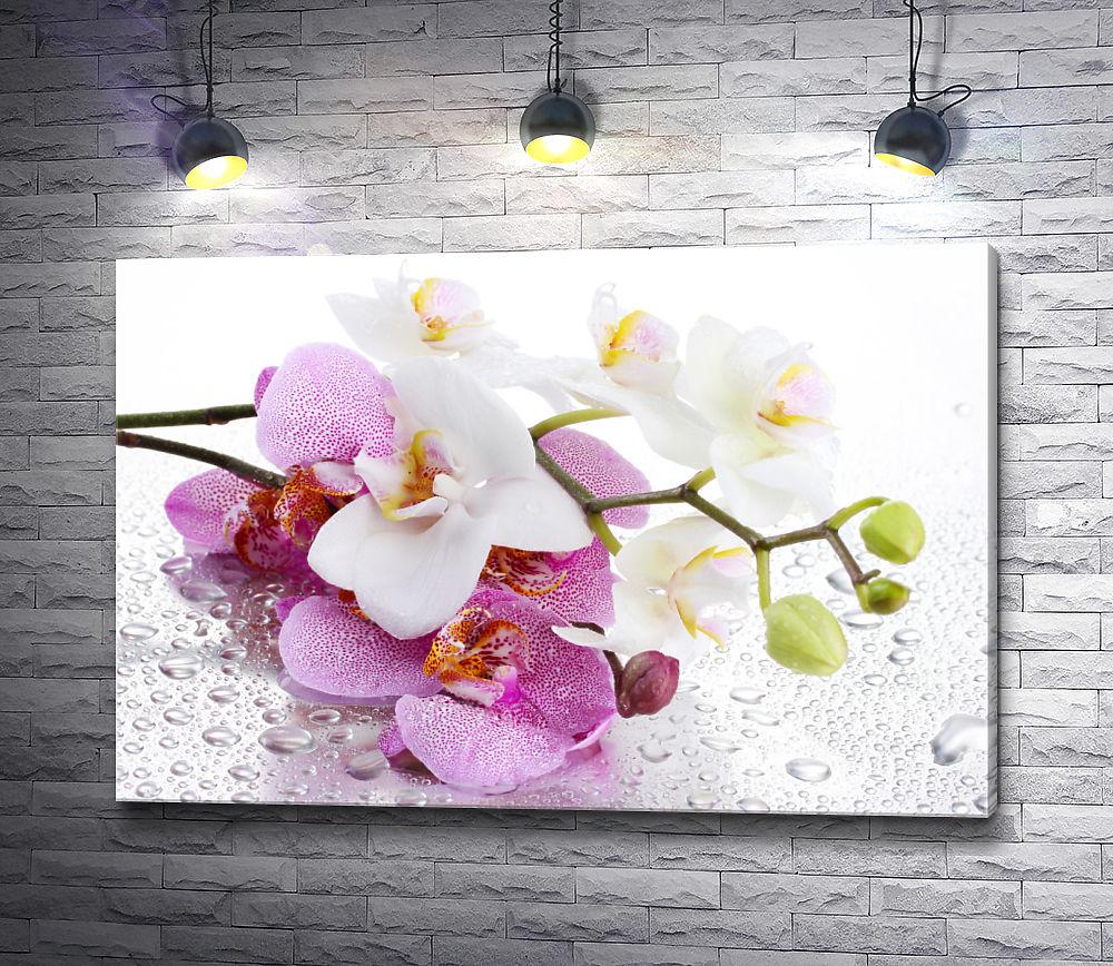 """Картина """"Лепестки орхидеи в капельках росы"""""""