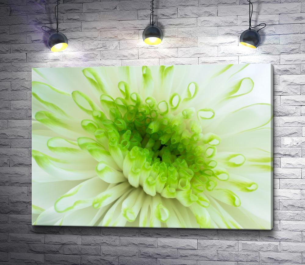 "Картина ""Салатовый цветок. Макросъемка"""