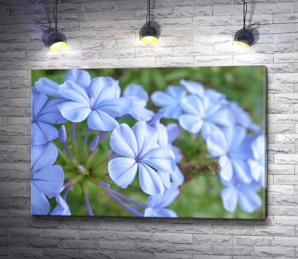 """Картина """"Нежно-голубые цветы"""""""