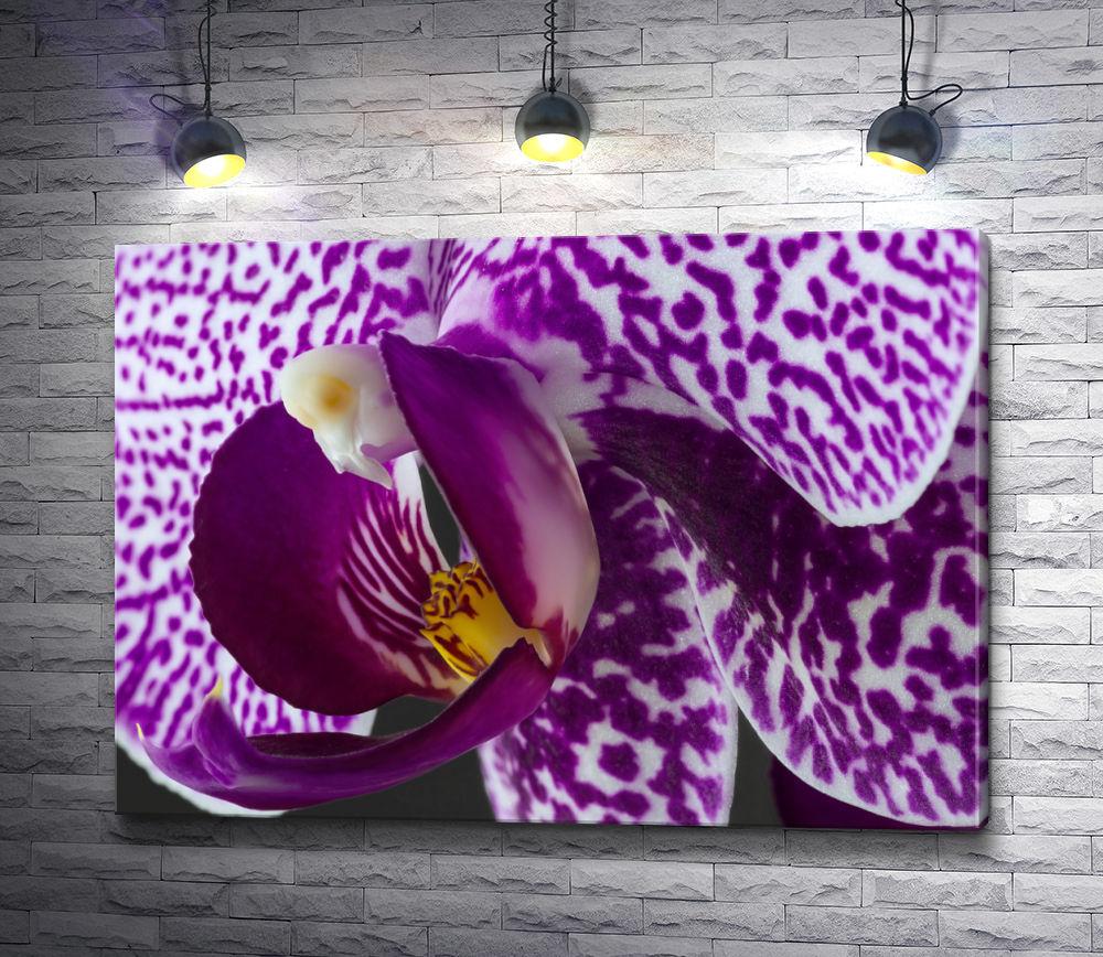 """Картина """"Тигровая орхидея. Макросъемка"""""""