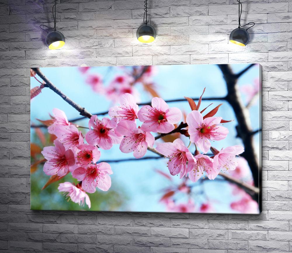 "Картина ""Ветка абрикосового дерева в цветах"""