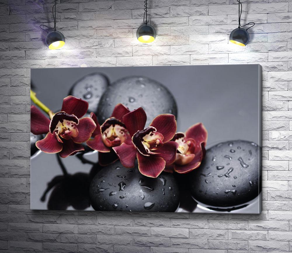 """Картина """"Красная орхидея с дзен-камнями на мокром черном фоне"""""""