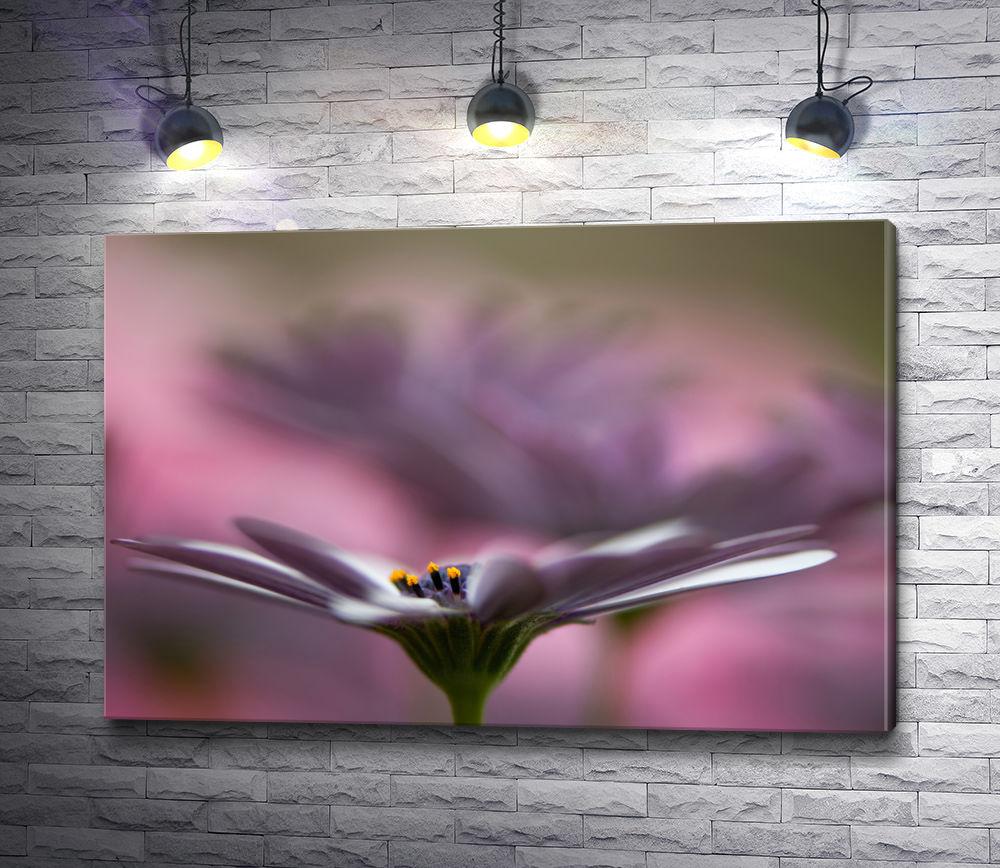 "Картина ""Бархатный цветок. Макросъемка. """