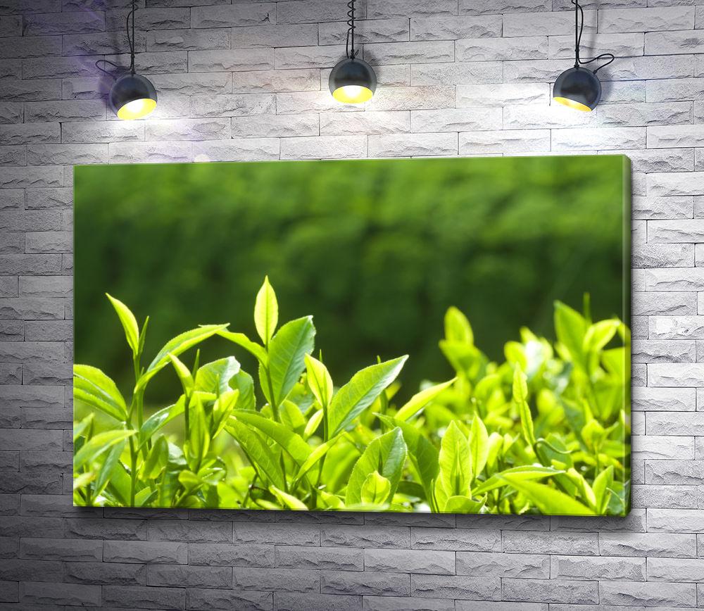 """Картина """"Зеленые чайные листья в солнечном свете """""""