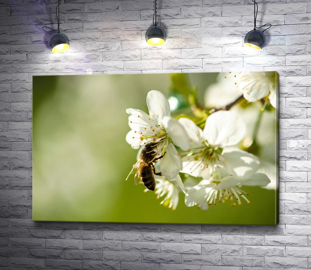 """Картина """"Пчела на яблоневом цветке """""""