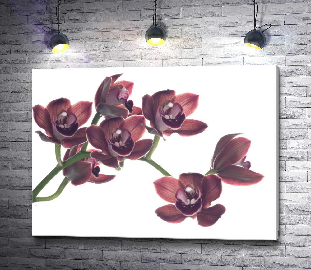 """Картина """"Веточка цветка Цимбидиум на белом фоне """""""