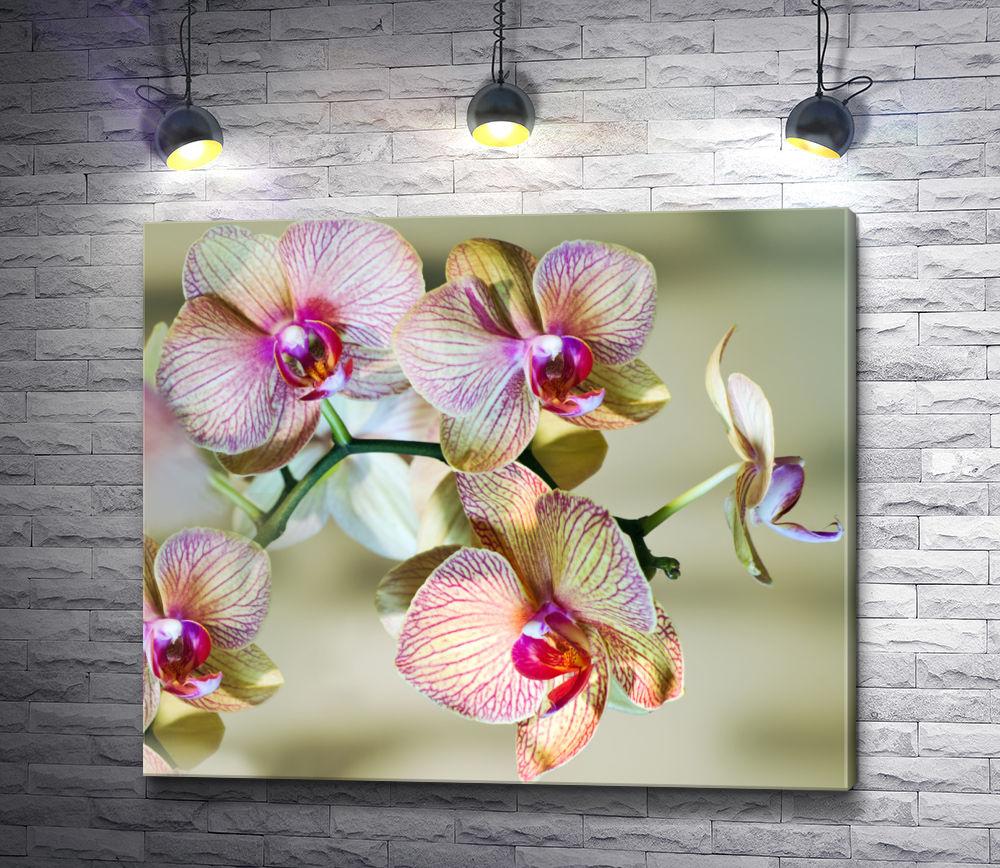 """Картина """"Ветвь орхидеи в цвету"""""""