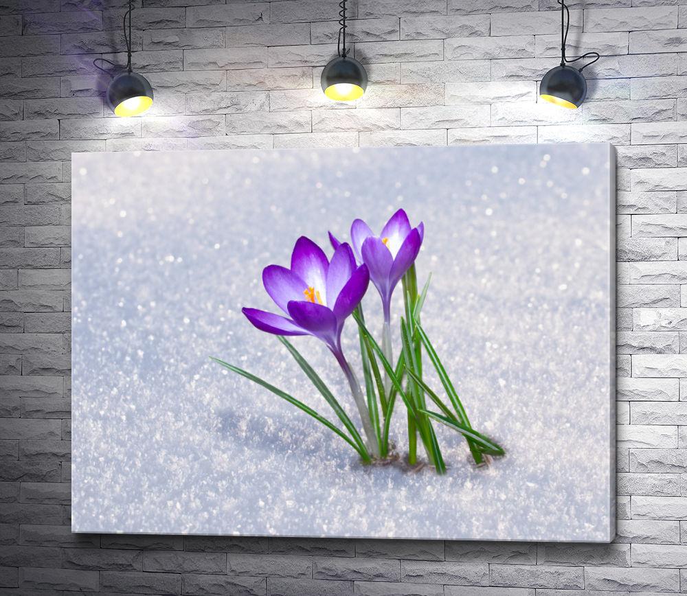 """Картина """"Сиреневый крокус пробивается сквозь снег """""""