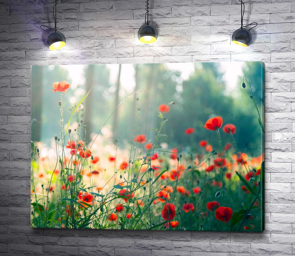 "Картина ""Дикие маки в солнечном лесу """