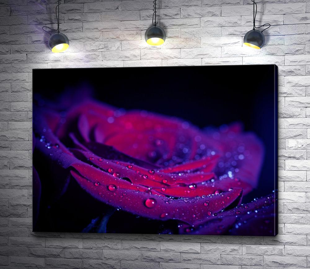 """Картина """"Бархатная роза фиолетового цвета"""""""