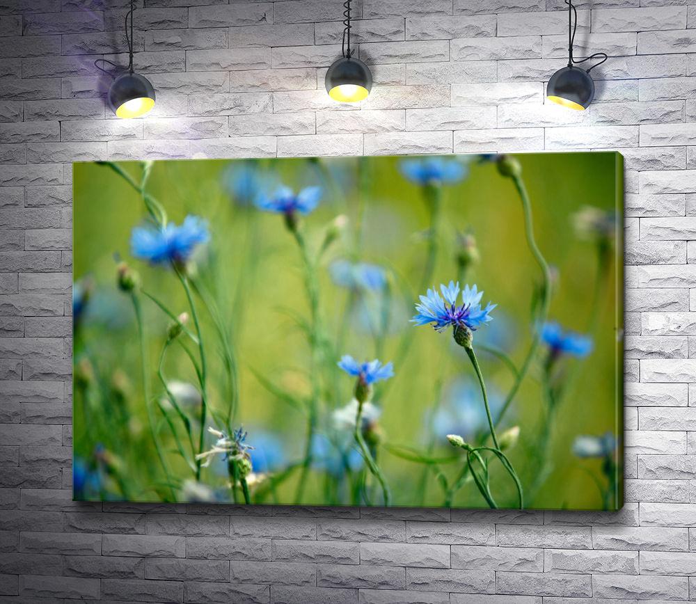 """Картина """"Синие васильки в траве """""""