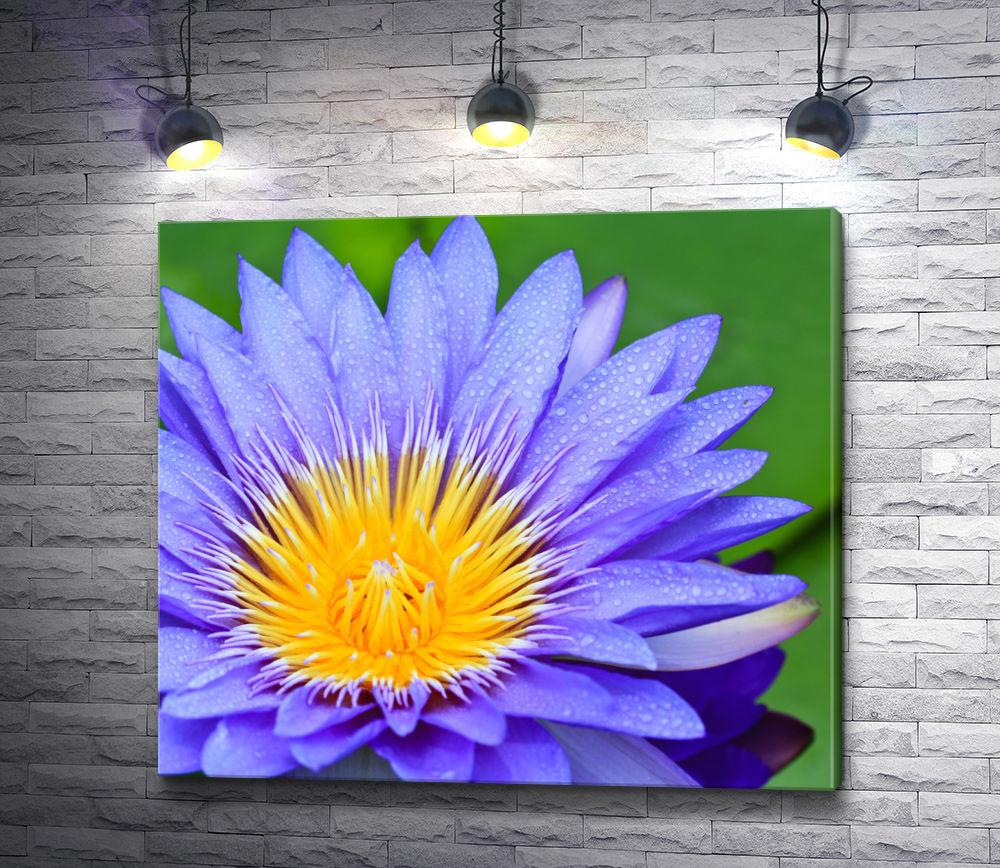 "Картина ""Макросъемка лилового цветка"""