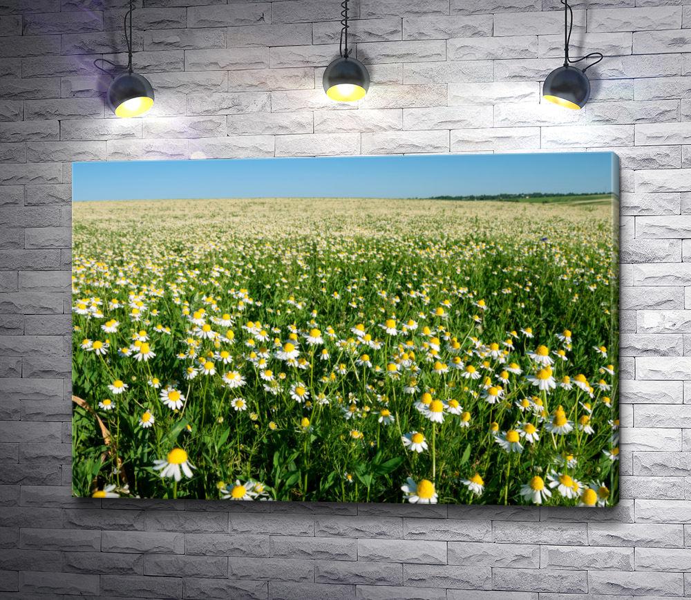 """Картина """"Ромашковое поле,  уходящее за горизонт"""""""