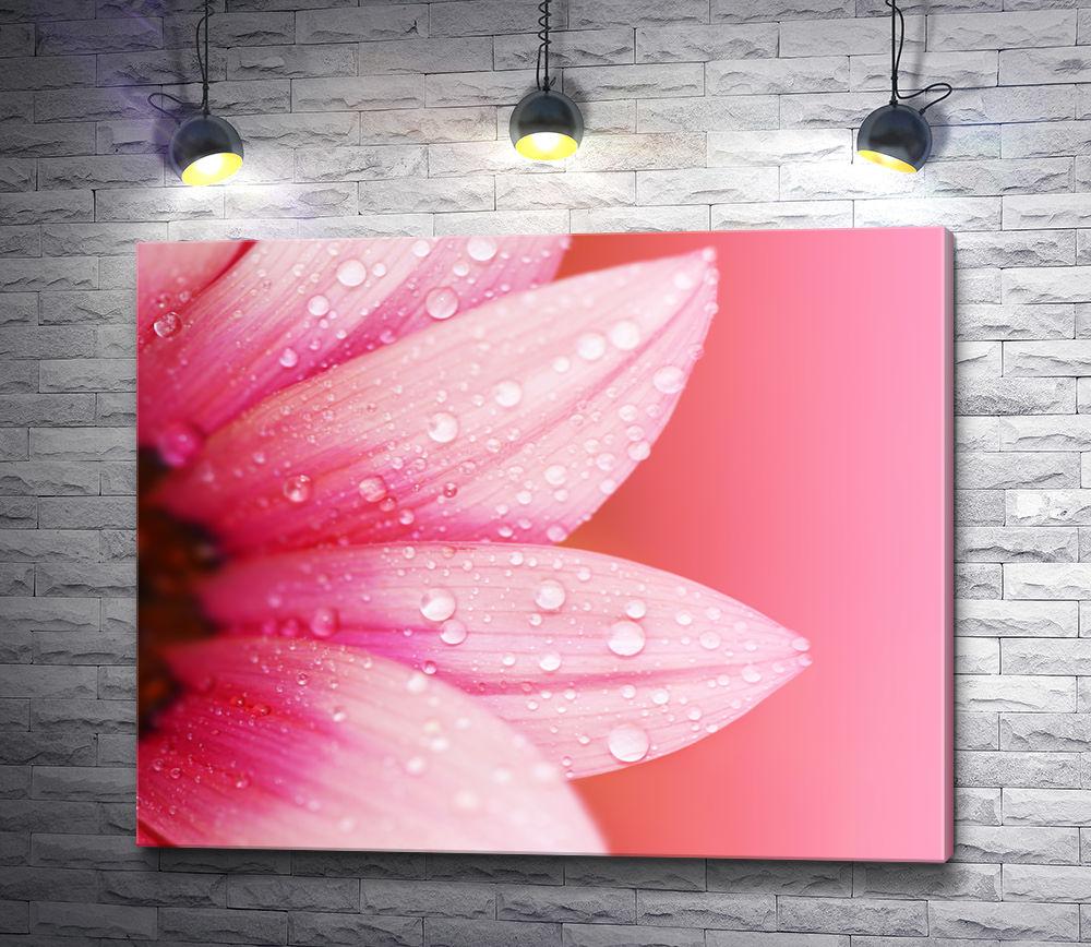 """Картина """"Лепестки розовой герберы с каплями росы"""""""