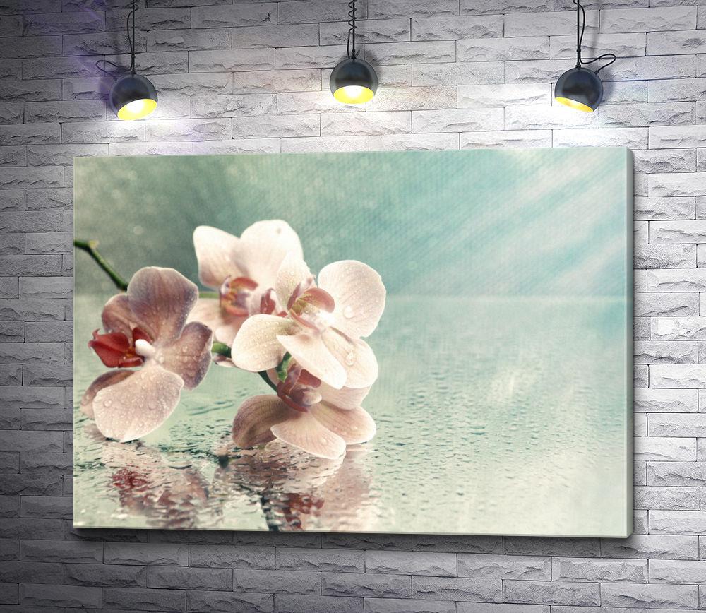 """Картина """"Розовые орхидеи с каплями воды на зеркальном столе"""""""