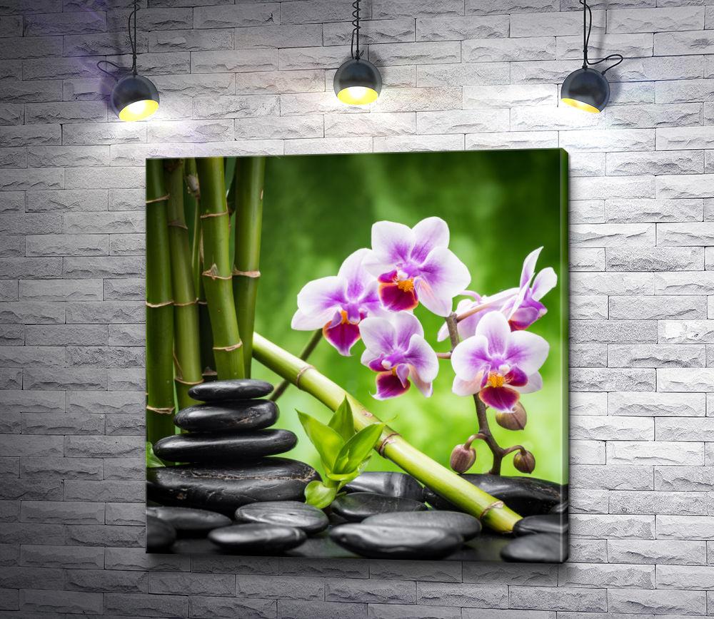 "Картина ""Фиолетовая орхидея, бамбук и камни спа"""