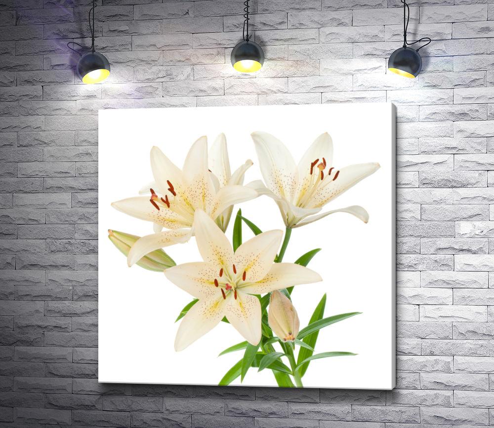 """Картина """"Три бело-желтых лилии на белом фоне"""""""