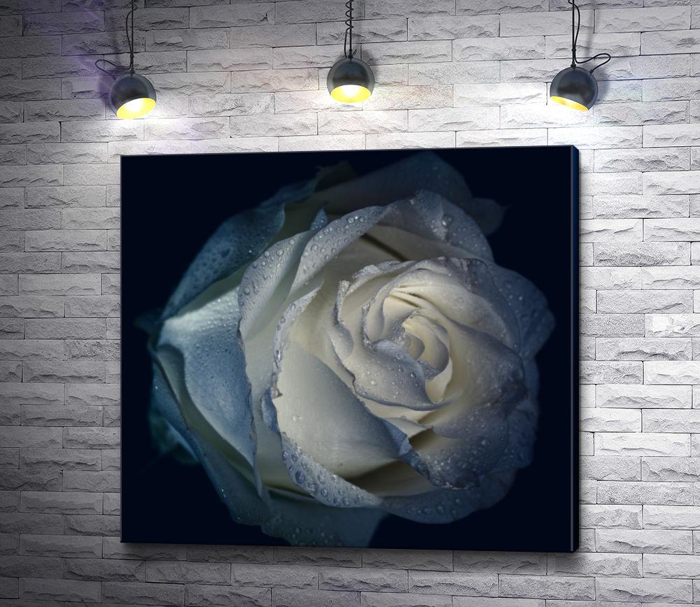 """Картина """"Бутон белой розы с каплями воды"""""""