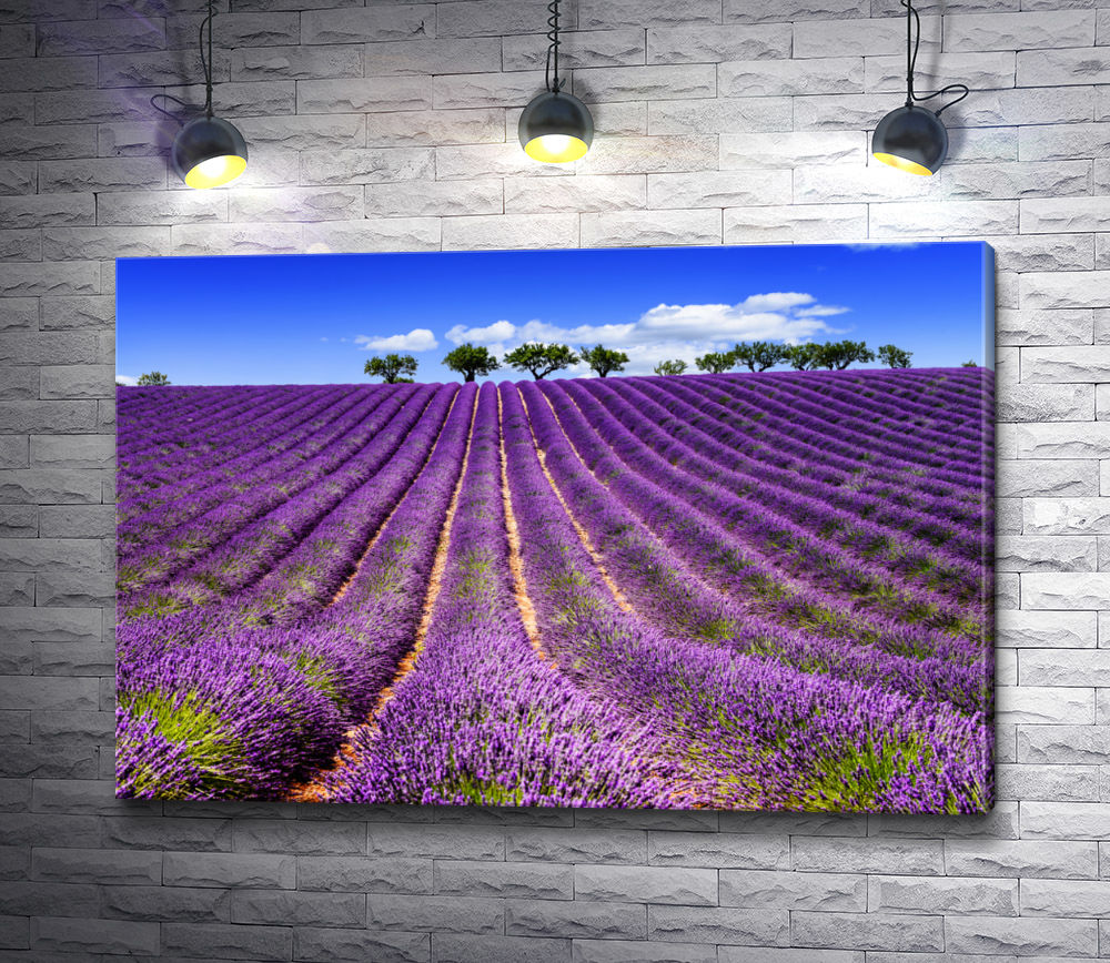 """Картина """"Лавандовое поле летом в Провансе. Франция"""""""
