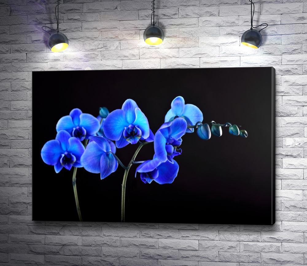 """Картина """"Голубые орхидеи на черном фоне"""""""