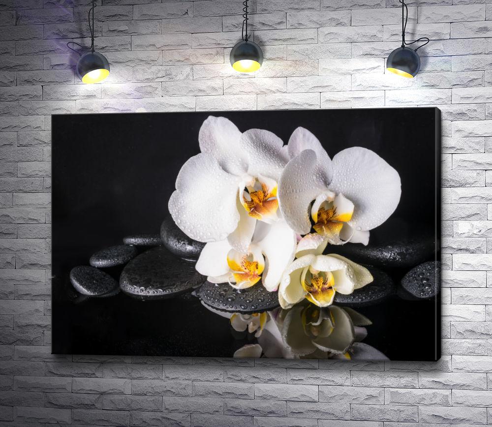 "Картина ""Белая орхидея и камни спа на черном фоне"""